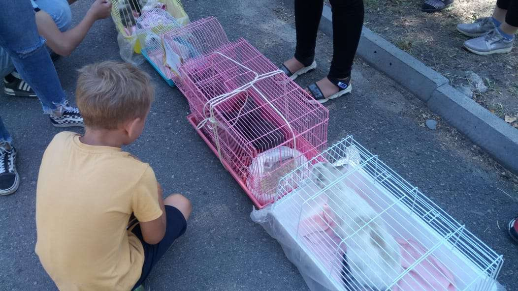Выставка кошек и собак в Талдыкоргане