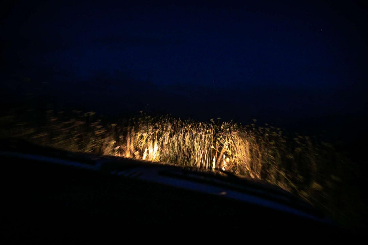Вид из автомобиля на степь ночью