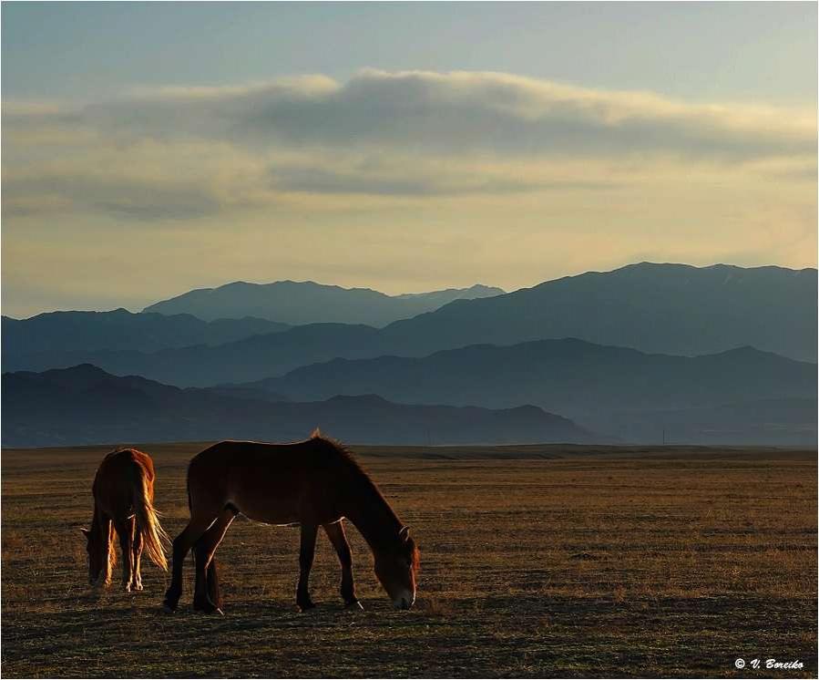 Жаланашская долина. Алматинская область