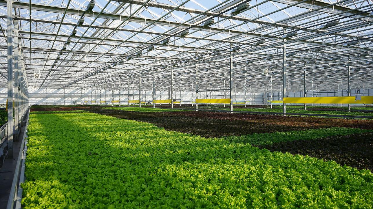 "Выращивание зелени в теплице ТОО ""Green Eco"""